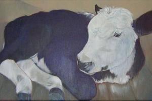 koeien uit het verleden
