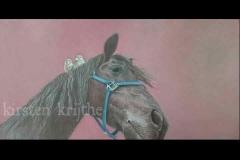 Fries paard met mussen - olieverf op canvas - 30 x 70 cm.