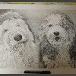 Pentekeningen - opdracht - 40x60 cm.