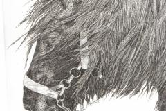 Pentekening paard - 20 x 30 cm.
