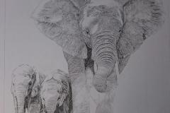 Pentekening olifanten - 40 x 40 cm.